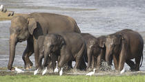 Private Tour: Hurulu Eco Park Safari, Anuradhapura, Safaris