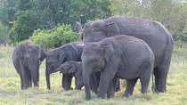 Private Tour: Kaudulla National Park Safari, Central Sri Lanka, Safaris