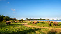 Private Tour: Minneriya Nationalpark Safari, Central Sri Lanka, Private Sightseeing Tours