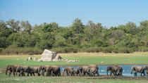 Private Tour: The Great Elephant Gathering Safari in Minneriya, Central Sri Lanka, Safaris