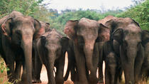 Private Tour: Wasgamuwa National Park Safari, Central Sri Lanka, Safaris