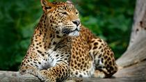 Private Tour: Yala National Park Safari from Galle, Galle, Private Day Trips