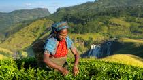 Unique Journey to a Tea Plantation from Kandy, Kandy, Plantation Tours