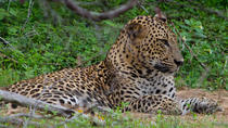 Yala Private Leopard Safari, Yala National Park, 4WD, ATV & Off-Road Tours