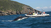 Trinity Bay Whale Watching Tour, Newfoundland & Labrador, Dolphin & Whale Watching
