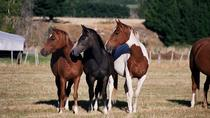 Westray Adventures - Horse Treks, Te Anau, 4WD, ATV & Off-Road Tours