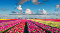 Private Holland Flower Tour including Keukenhof Gardens and Flower Auction from Amsterdam, ...