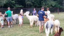 Tour in fattoria alpaca ad Adairsville in Georgia, Atlanta