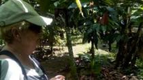 Don Olivo Chocolate Tour from La Fortuna, La Fortuna, Food Tours
