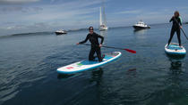 Helford River 2-Hour Stand-Up Paddle Boarding Tour in Falmouth, Cornwall, Stand Up Paddleboarding
