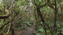 Tenerife-Gardens of the Atlantic, Tenerife, Ports of Call Tours