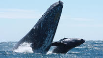 Up-Close Whale Watching Tour in Cabo San Lucas, Los Cabos, Stand Up Paddleboarding