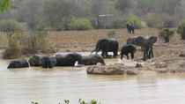 4-Day Wildlife Safari in Mole National Park from Accra, Accra, Multi-day Tours