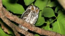 Full-Day Bird and Owl Watching Tour from Accra, Accra