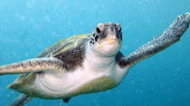 2 Certified Guided Dives in Tenerife, Tenerife, Scuba Diving