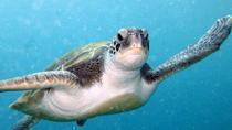 PADI Discover Scuba Diving Course in Tenerife, Tenerife, Scuba Diving