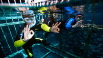 Cage Snorkeling, Dubai, Family Friendly Tours & Activities
