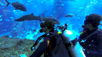 Diving with Sharks certified, Dubai, Other Water Sports
