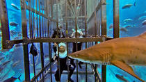 Shark Walker Experience at Dubai Aquarium and Underwater Zoo, Dubai, Scuba Diving