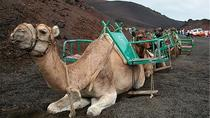 Camel Ride in the Dunes of Maspalomas, Gran Canaria, Nature & Wildlife