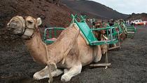 Maspalomas Dunes Camel Ride, Gran Canaria, Nature & Wildlife