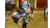The Dancing Andalusian Horse Show, Andalucia, Theater, Shows & Musicals