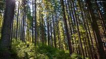 Hiking in the Carpathian Mountains near Yaremche, Ukraine, Hiking & Camping