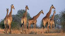 Private Shuttle Service from Johannesburg to Kruger National Park, Johannesburg, Private Transfers