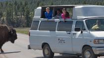 Buffalo Safari Van - Small Group Tour, Rapid City, Bus & Minivan Tours