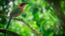 Bird Watching Tour at Arenal Natura Ecological Park, La Fortuna, Nature & Wildlife