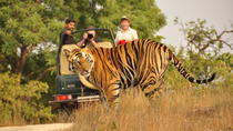 2-Day Ranthambore National Park Tour From Jaipur, Jaipur, Multi-day Tours