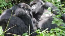 Gorilla Trekking and Wildlife Game Drives in Rwanda and Burundi, Kigali, Multi-day Tours