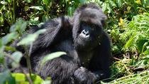 3-Day Gorilla Tracking Tour, Kampala, Multi-day Tours
