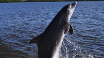 Dolphin and Wildlife Cruise in Fort Myers Beach, Fort Myers, Dolphin & Whale Watching