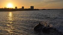 Fort Myers Dolphin and Shelling Cruise at Sunset, Fort Myers, Sunset Cruises
