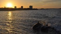 Fort Myers Dolphin and Shelling Sunset Cruise, Fort Myers, Sunset Cruises
