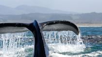 Whale Watching Day Cruise Santa Monica, Redondo, and Palos Verdes Bay, Santa Monica, Day Cruises