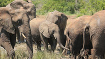 Hluhluwe-Imfolozi Game Reserve Guided Day Tour from Durban, Durban, Day Trips