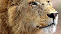 Lion Park Safari Guided Day Trip from Durban, Durban, Day Trips