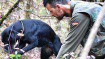 Siena Truffle-Hunting Experience, Siena, Nature & Wildlife