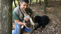 Siena Truffle-Hunting Experience, Siena, Cultural Tours