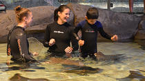 Ripley's Aquarium of Canada: Stingray Experience, Toronto, Attraction Tickets