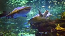 Sharks After Dark - Ripley's Aquarium van Canada in Toronto, Toronto, Attraction Tickets