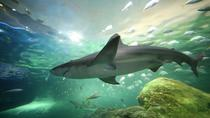 Skip the Line: Ripley's Aquarium of Canada in Toronto, Toronto, Attraction Tickets