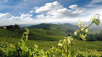 Wine Tasting and Unesco World Heritage Cellars Visit from Turin, Langhe-Roero and Monferrato, Wine ...