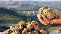 Alba: Half-Day Truffle Hunting and Tasting Tour in Piedmont, Langhe-Roero et Monferrato