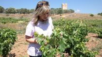 Athens Wine Tasting Tour in a Greek Winery, Athens, Wine Tasting & Winery Tours