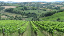 From Bologna: Wine Tasting and Vineyard Tour, Bologna, Wine Tasting & Winery Tours