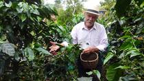 From the seed to the cup: Colombia coffee area photo tour, Armenia, Coffee & Tea Tours
