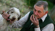 Truffles Hunting in Alba and Local Delicacies Tasting, Langhe, Roero und Monferrato